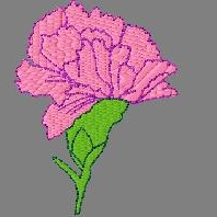 Pretty single carnation